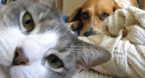animal smart pet care